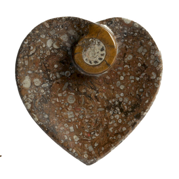 Closeup photo of Ammonite Fossil Heart Dish