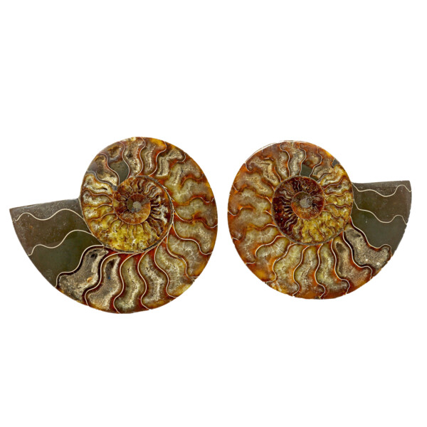 Closeup photo of Ammonite Fossil Pair With Carmel Calcite