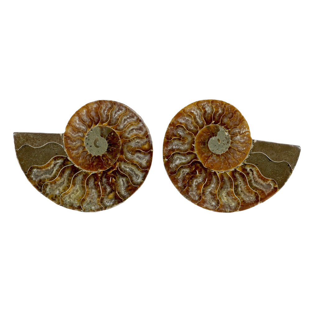 """Image 2 for Ammonite Fossil Pair 3"""" - 4"""""""