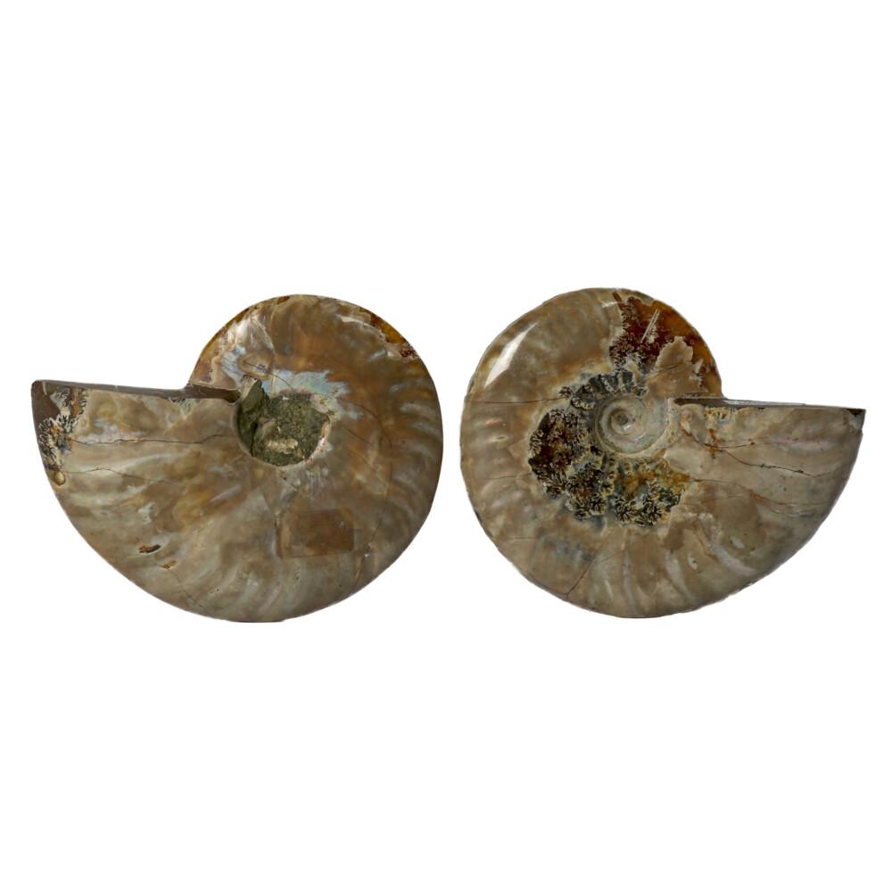 """Ammonite Fossil Pair 3"""" - 4"""""""