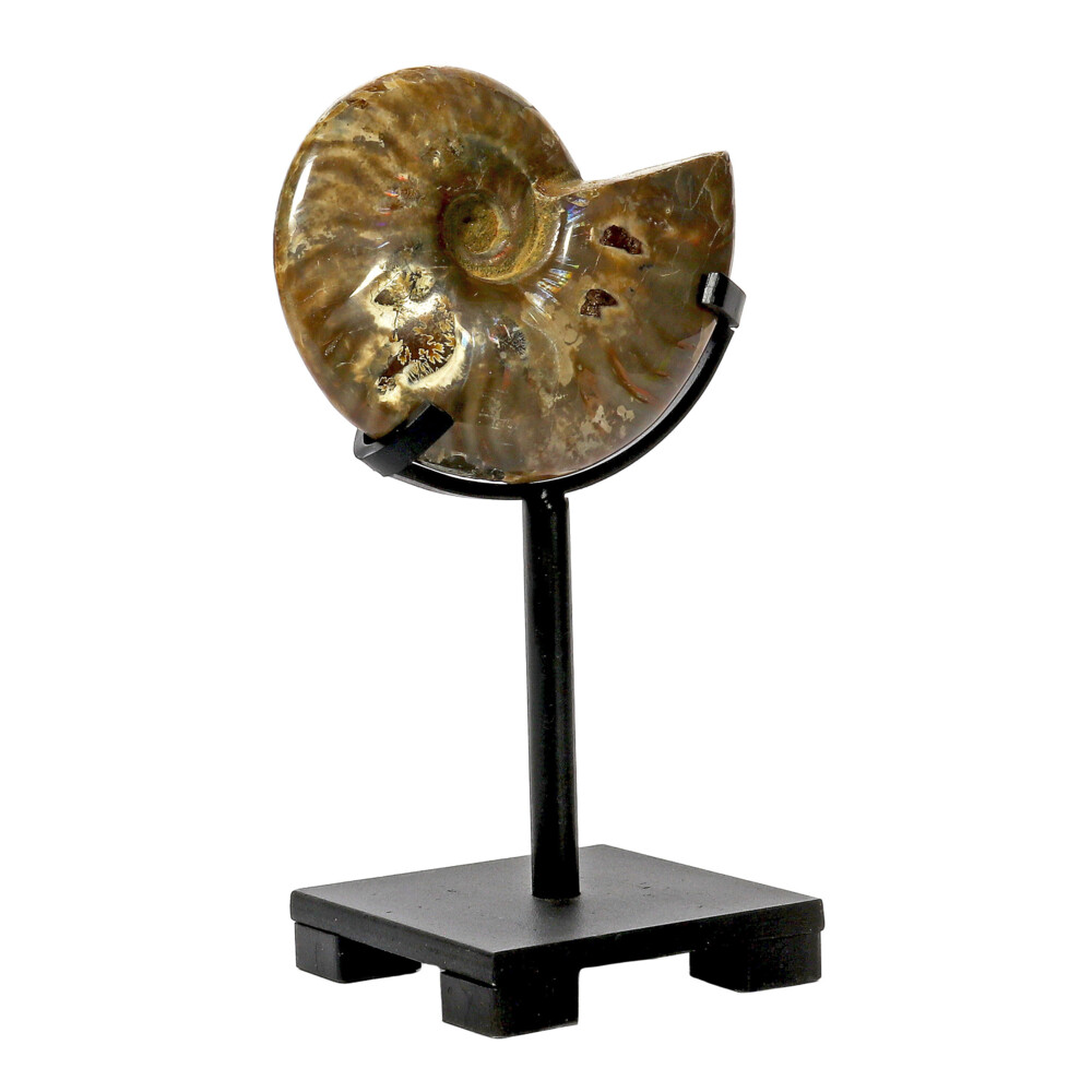 Image 2 for Opalized Ammonite On Custom Post Stand