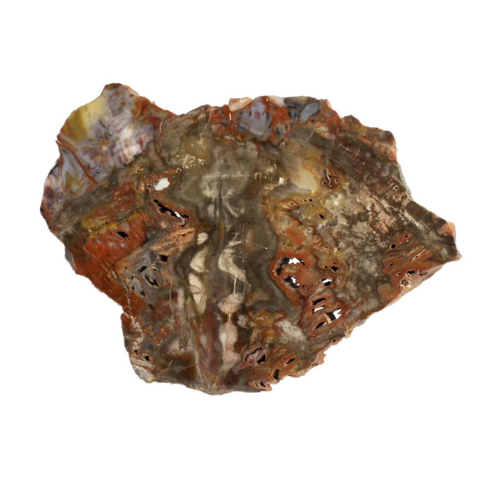 Arizona Petrified Wood Chunk -Polished Side