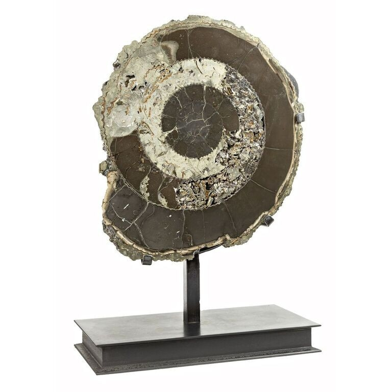 Pyritized Ammonite Half from Russia In Custom Stand