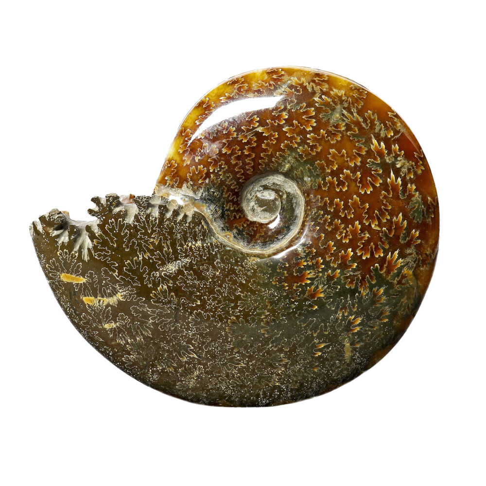 Image 2 for Ammonite Fossil -Whole With Sutures From Madagascar