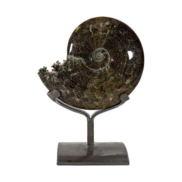 Closeup photo of Ammonite Fossil Whole - Sutures On Custom Stand