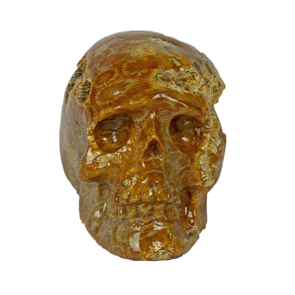 Fossilized Coral Skull Small