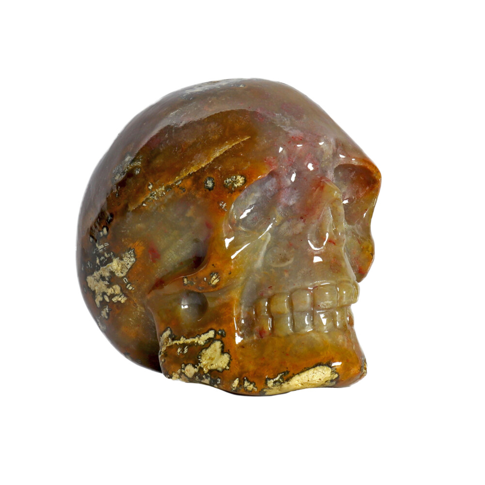 Image 2 for Fossilized Coral Skull Small