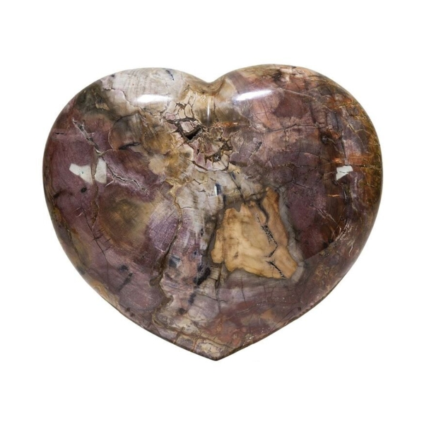 Closeup photo of Heart Of Madagascar Petrified Wood